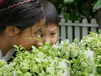 Exploring the garden at BEYC at British Early Years Centre International kindergarten in Bangok
